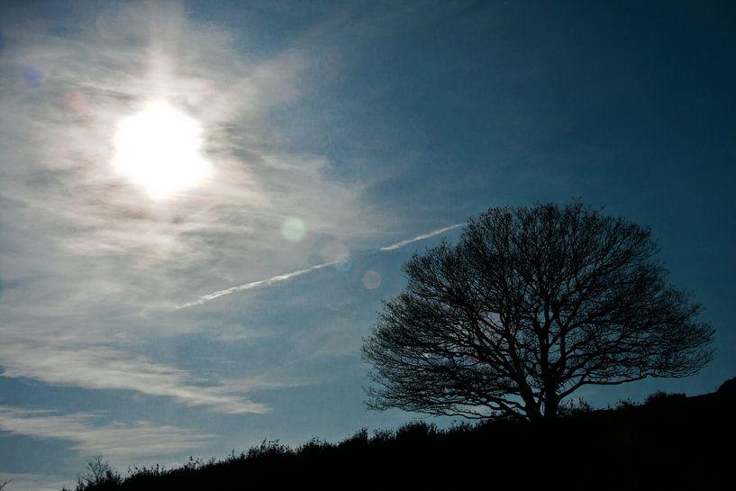 Lonely tree van Robbie Veldwijk