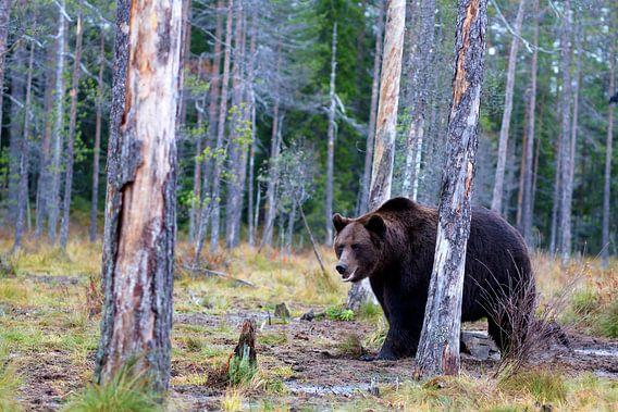 Bear van Petra ter Veer