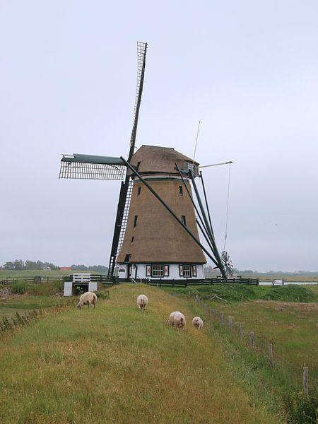 Molen Het Noorden, Texel van Liselotte Helleman