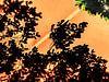 Oranje boven! van Pieter van Roijen thumbnail
