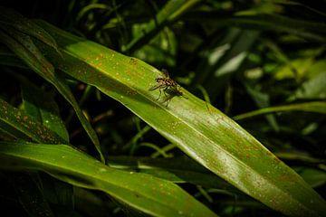 Fliege sitzt auf Dschungelblättern von pixxelmixx