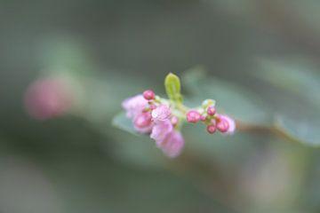 roze wild bloemetje van