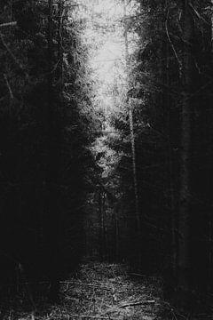 Es ist Licht am Ende des Tunnels, dunkler Wald mit kleinen Sonnenstrahlen. von Holly Klein Oonk