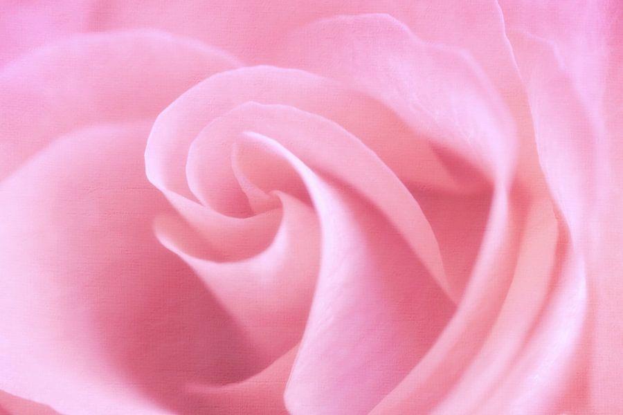 Rose swirls