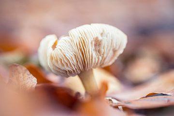 Pilz von Kristof Ven