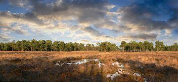 Heide mit Flachmooren von Corinne Welp