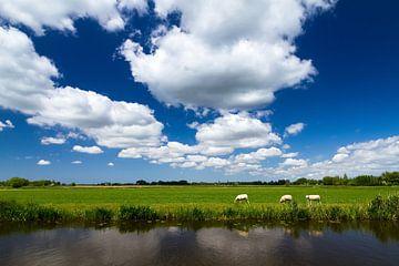 Hollands landschap met schapen van Dennis van de Water