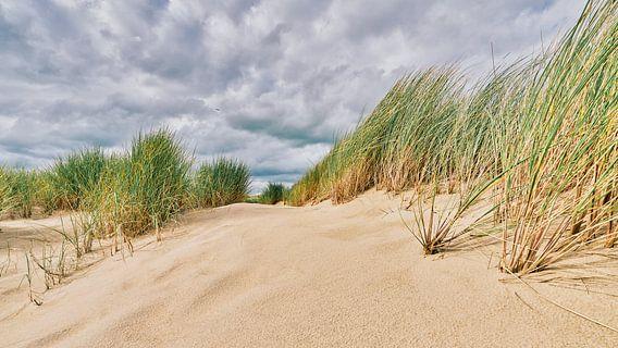 De duinen met het helmgras