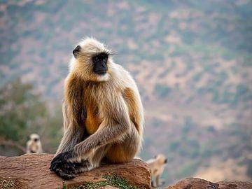 Kontemplation auf dem Affenfelsen von Rik Pijnenburg