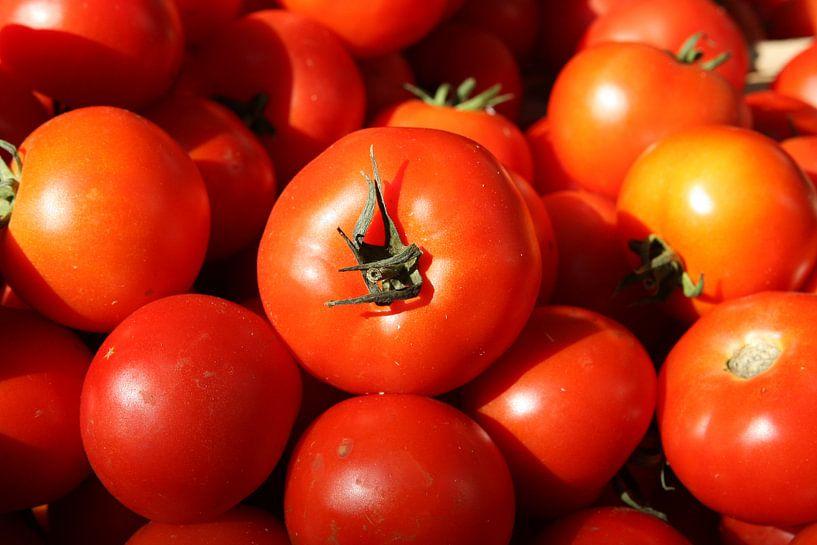 tomaten van Frans Versteden