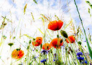 Feldblumen von Ronnie Reul