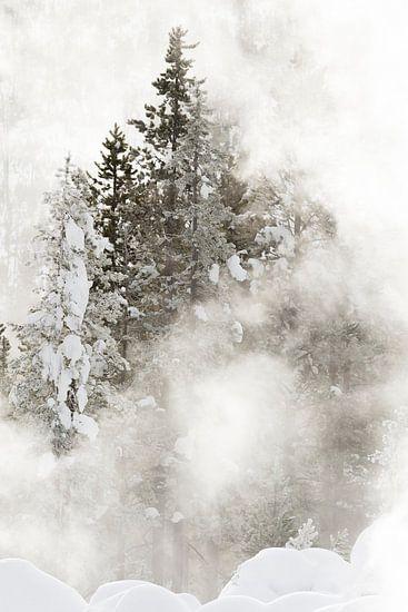 Naaldbomen in Yellowstone Nationaal Park in de winter van Caroline Piek