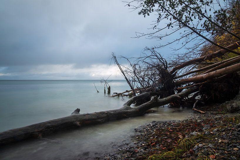 Ostseeküste auf der Insel Moen in Dänemark von Rico Ködder