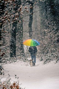 Kleuren in de winter