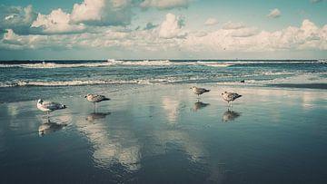 Meeuwen op het strand van de Noordzee van Steffen Peters