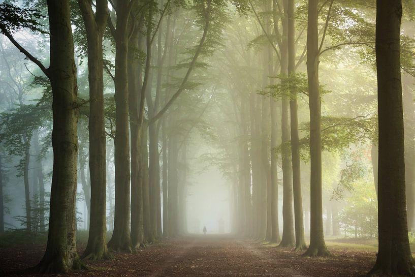 Sunrise. van Inge Bovens