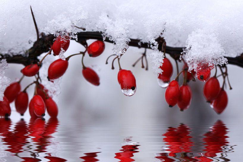 Schneezauber van Renate Knapp