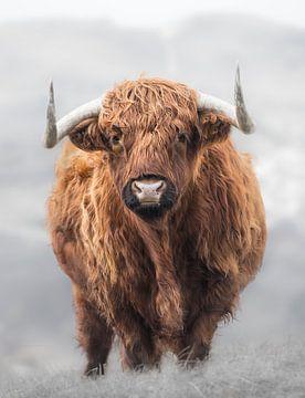 Highlander écossais sur