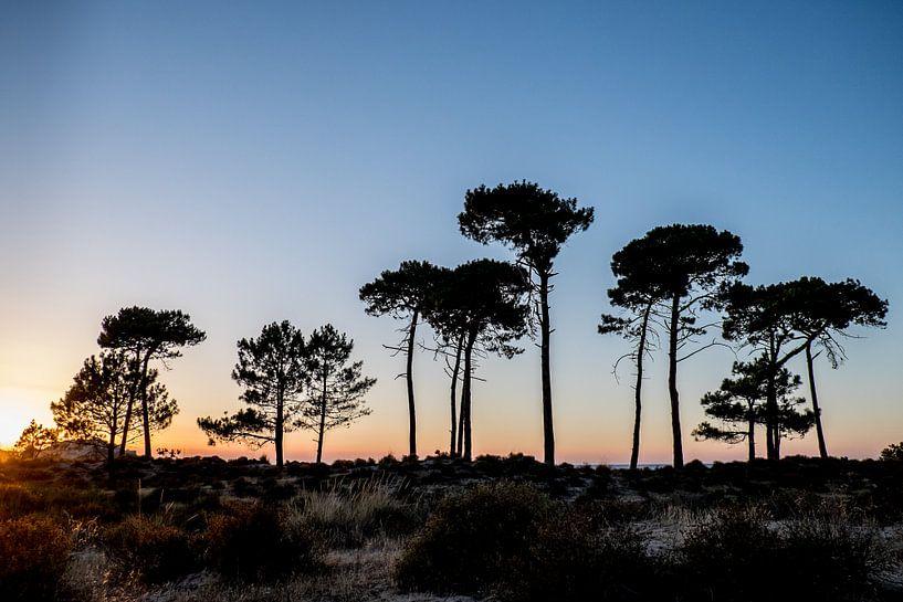 Trees van Eliene de Jong - Sonneveld