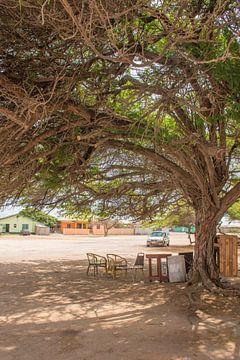 Landschaft und Leben auf Aruba von Bianca Kramer