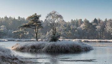 un paysage hivernal avec du gel
