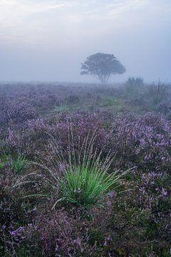 Ein Stück Grün in der violetten Heide von Albert Lamme