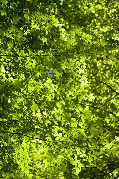 Green pixels van Leon van Voornveld