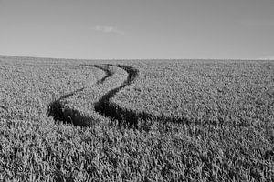 Die Hand des Landwirts von Gelein Jansen