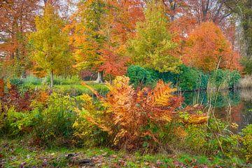 Ein Waldfarn in Herbstfarben von eric van der eijk