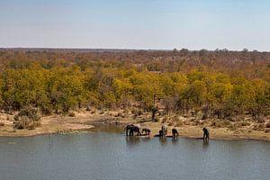 Kruger Wildpark