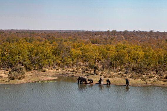Kruger Wildpark van Marika Rentier
