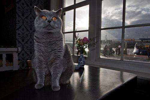 Tabby cat in café De Pont, Amsterdam van