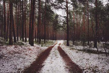 Un chemin forestier dans la neige sur Skyze Photography by André Stein