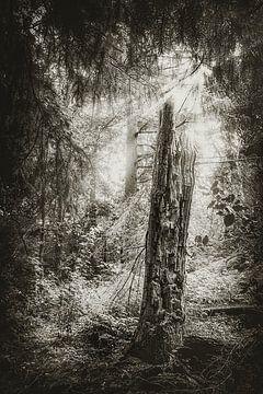 Levensboom - dode boom in het midden van het bos in het mooie Cuxhaven van Jakob Baranowski - Off World Jack