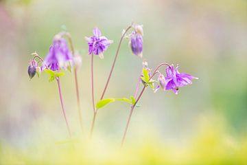 Bloemen van Leora Kalisvaart