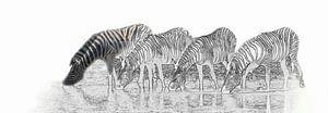 Drinkende zebra's in Etosha Nationaal Park van