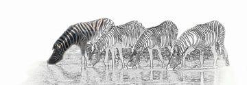 Boire zèbres dans le parc national d'Etosha sur