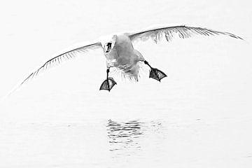 Happy landing van Fotografie Jeronimo