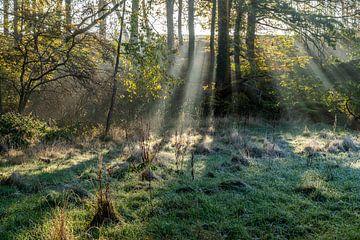 Sonnenstrahlen im Wald von Peter Schickert