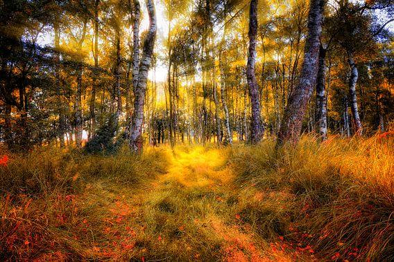 Herfst in kleur van Rigo Meens