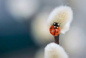 Genießen Sie die kleinen Dinge des Lebens...... von Arjanne Gols
