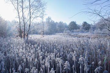 Bevroren veld van