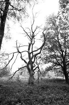 Toter Baum von Anita van Hengel