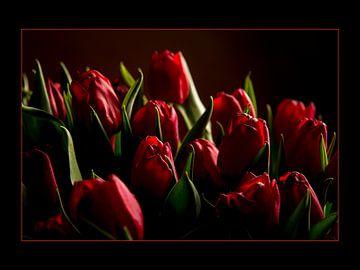 Schitterende rode tulpen van Coby Bergsma