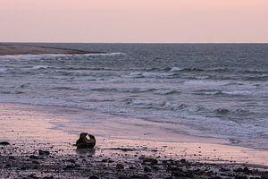 Twee zeehonden op een strand