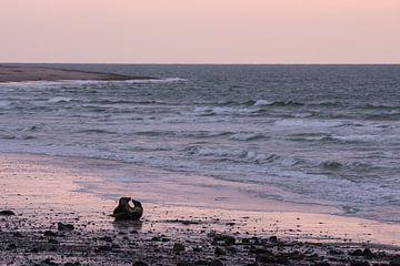 Twee zeehonden op een strand van
