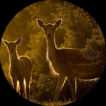 Twee herten bij ondergaande zon van Marcel Alsemgeest