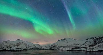 Nordlichter im nächtlichen Himmel über den Lofoten Inseln in Nordnorwegen von Sjoerd van der Wal