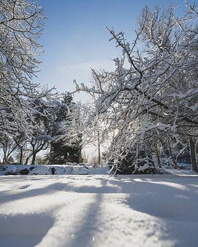 Zon door bomen in park van Jonai