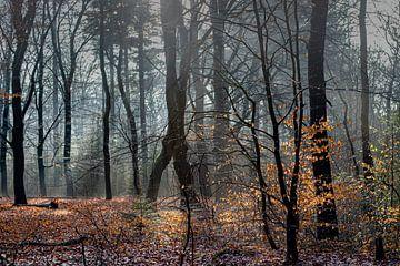Nebel im Wald bei Auterlitz von Atelier van Saskia